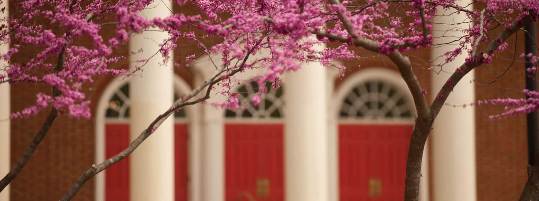 Flowers in bloom on Regent University's beautiful campus in Virginia Beach.